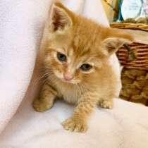 Рыжий котёнок ищет дом, в Москве