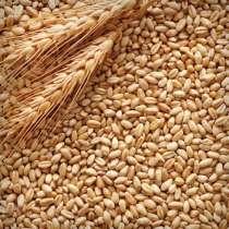 Пшеница, в Нижнем Новгороде