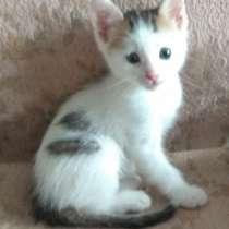 Очаровательный котёночек-мальчик - в заботливые руки, в Багаевского