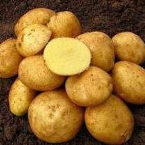 Картофель оптом, в Пензе