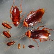 Уничтожение тараканов, избавиться от тараканов в Туле, в Туле