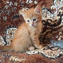 Отдам чудесного котика, в Перми