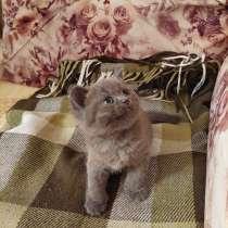 Продаётся британский котёнок. Девочка. Цена 160 azn, в г.Баку