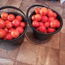 Продам помедоры, в Комсомольске-на-Амуре