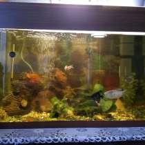 Продам аквариум, в Красноярске