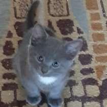 Кошечка 2 месяца, ласковая, в Балашихе