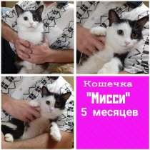 Котенок Мисси в дар, в Кирове