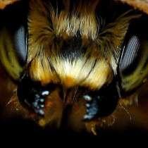 Привоз пчелопакетов Карпатка, Карника на 2020 год, в Омске