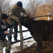 Надёжная защита здоровья жвачных животных, в г.Алматы