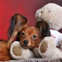 Русский той замечательные щенки для шоу и души, в Новосибирске
