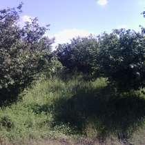Ореховая плантация, в г.Зугдиди