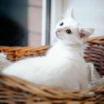 Котята метисы ищут дом, в Москве