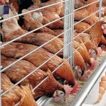 Ищу инвестора для сельского хозяйства, в Шарье