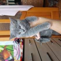 Отдам котенка, в Липецке
