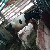 Продам корову, в г.Barlad