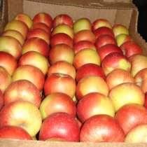 Яблоки оптом, в Самаре