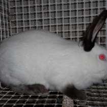 Клетки для кроликов, в Екатеринбурге