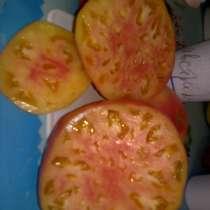 Продаю семена томатов для ОГ и теплиц, более 100 сортов!, в Коломне