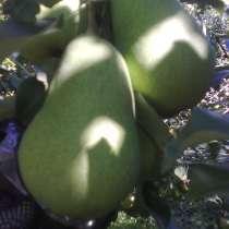 Саженцы плодовых и декоративных растений, в Коломне