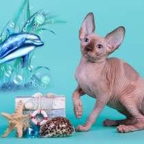 Волшебный котёнок Эльф, Бамбино, канадский сфинкс, Двэльф, в г.Штернберг