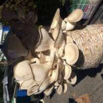 Грибные блоки для выращивания грибов вёшенки, в Хабаровске