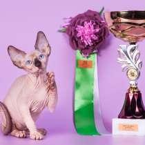 Котёнок, это не просто котёнок., это Эльф, Двэльф, бамбино!, в г.Гамбург