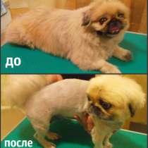 Стижка собак и кошек (груминг), в Новосибирске