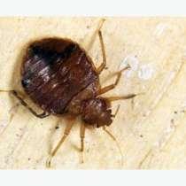 Уничтожить избавится вывести убить клопов блох муравьи тарак, в Томске