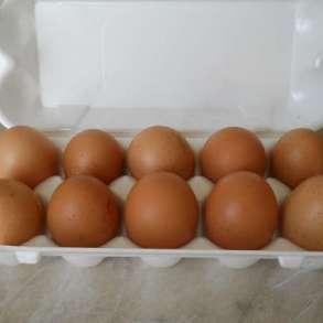 Продаю яйца куринные, в Москве
