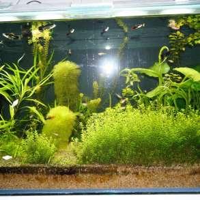 Рыбки. Креветки. Растения разные. Живой корм, в Волгограде