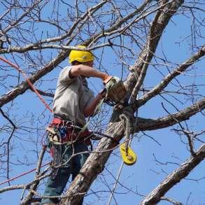 Спил деревьев, в Белгороде