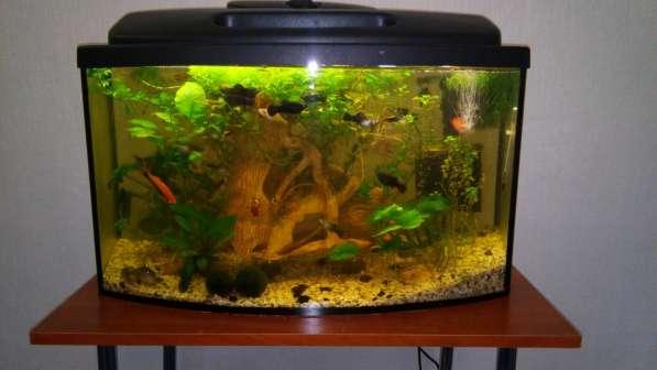 СУПЕР аквариум в