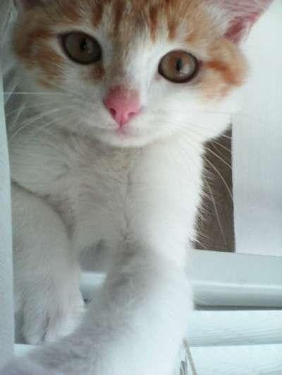 Отдам даром кот,6 месяцев
