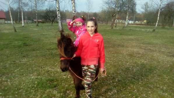 Туры для детей на пони ферму. Полесск. в Калининграде