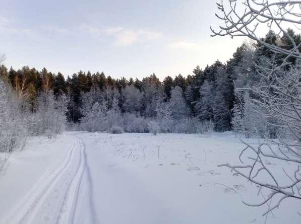 Участок с лесом