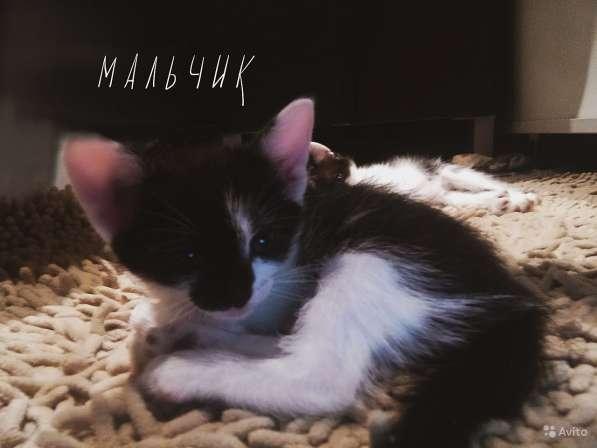 Отдам котяток в Балашихе фото 3