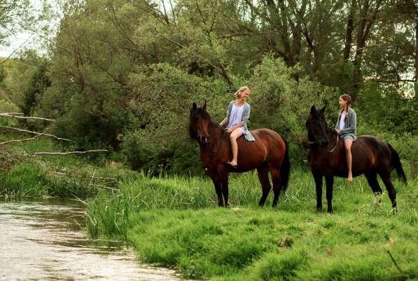 Конные прогулки в поля в Воронеже фото 6