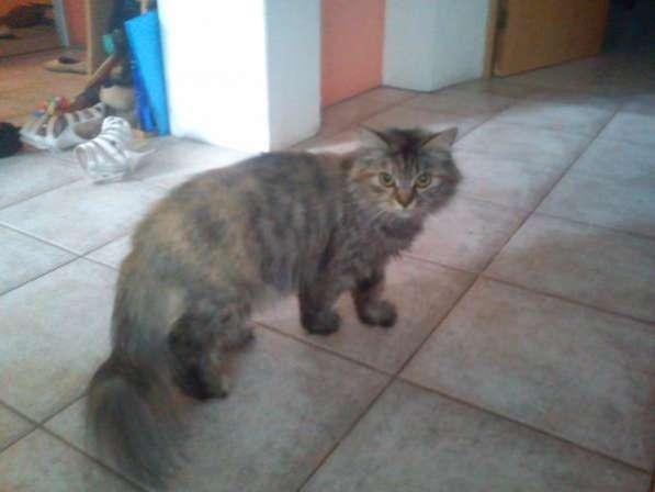 Кошка полосатик