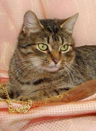 Премьер министр кошачьего мира Мяушка нуждается в доме.