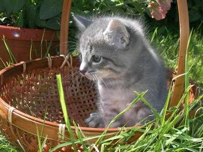 Отдам даром Отдадим в добрые руки котят