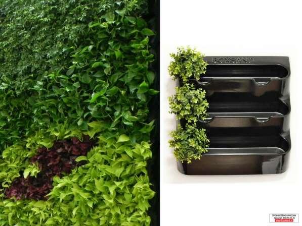 Фитомодуль 60х65 см для вертикального озеленения