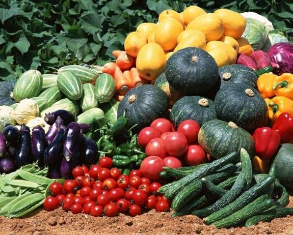 Помидоры, огурцы зелень, кабачки и многое другое