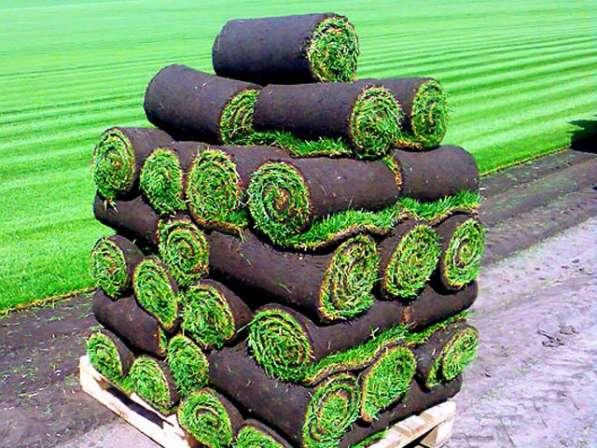 Рулонный газон от производителя в Владимире
