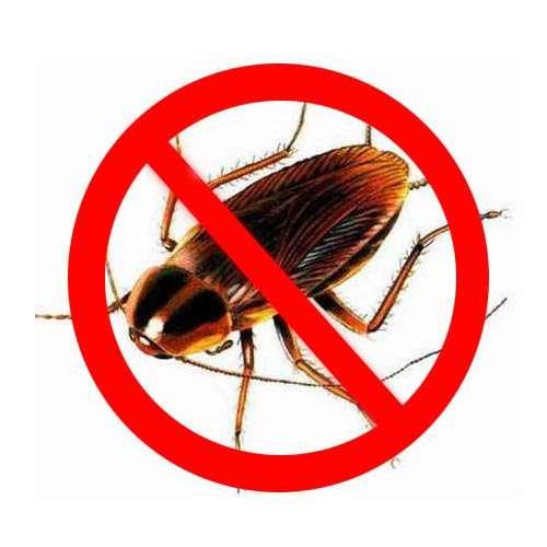 Уничтожить избавится вывести убить клопов блох муравьи тарак в Томске фото 4