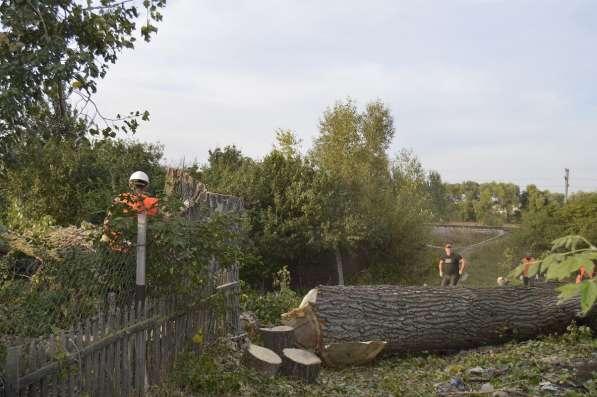 Валка и удаление деревьев любой сложности