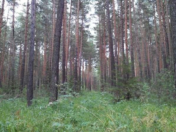 Участок с лесом в Красноярске фото 9