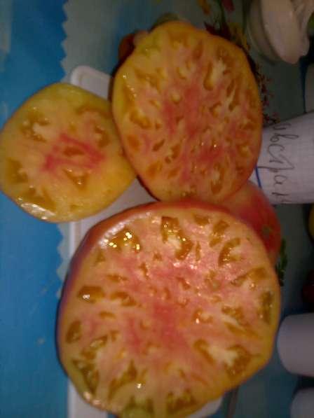 Продаю семена томатов для ОГ и теплиц, более 100 сортов!