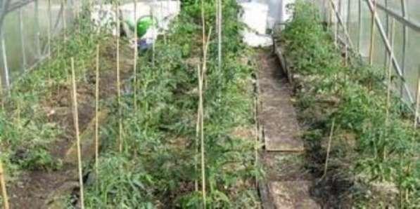 Опоры для садовых растений стеклопластиковые от производителя в Новосибирске