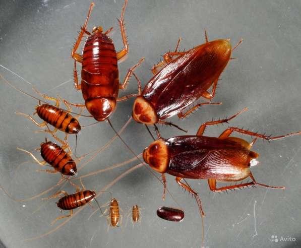 Избавим от тараканов блох шершней ос и т. д