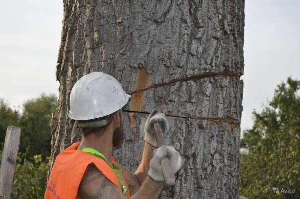 Спилим деревья